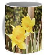 Narcissus Of A Plant Coffee Mug