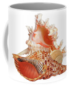 Natural Shell Collection On White Coffee Mug