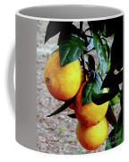 Naval Oranges On The Tree Coffee Mug