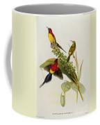 Nectarinia Gouldae Coffee Mug by John Gould