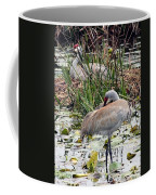 Nesting Sandhill Crane Pair Coffee Mug by Carol Groenen