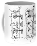 Neuroglia Cells Illustrated By Cajal Coffee Mug