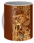 Newborn Fawn Coffee Mug