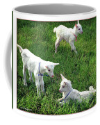 Newborn Goats Coffee Mug