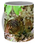 Newborn White-tailed Deer Fawn Coffee Mug