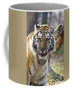Nice Kitty Coffee Mug