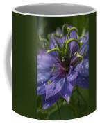 Nigella Damascena 3 Coffee Mug