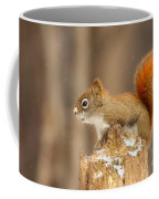 North American Red Squirrel In Winter Coffee Mug