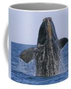 North Atlantic Right Whale Breaching Coffee Mug by Tony Beck
