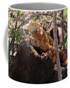 North Seymour Island Iguana In The Galapagos Islands Coffee Mug