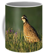 Northern Bobwhite Coffee Mug
