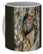 Northern Flicker Pokes His Head Out Coffee Mug