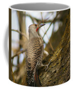 Northern Flicker Woodpecker 1 Coffee Mug