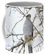 Northern Goshawk Coffee Mug