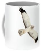 Northern Harrier Hawk, Yukon Coffee Mug