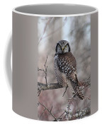 Northern Hawk Owl 9470 Coffee Mug