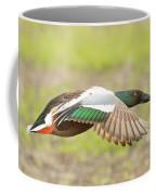 Northern Shoveler On The Wing Coffee Mug