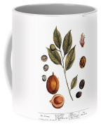 Nutmeg, 1735 Coffee Mug