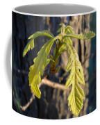 Oak Leaves In May Dawn Light Coffee Mug