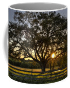 Oak Tree Sunset Coffee Mug