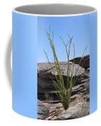 Ocotillo Of Desert Southwest Coffee Mug