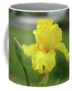 Office Art Irises Yellow Iris Flower Giclee Prints Baslee Troutman Coffee Mug