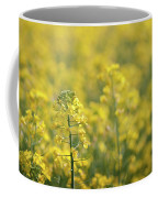 Oilseed Rape Coffee Mug