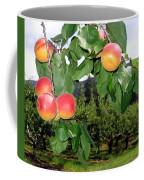 Okanagan Apricots Coffee Mug