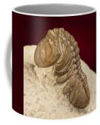 Oklahoma Trilobite. Coffee Mug
