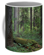 Old Growth Forest Coffee Mug