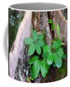 Old Life New Life Coffee Mug