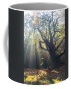 Old Tree And Sunbeams Coffee Mug