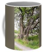 Old Weathered Tree Coffee Mug