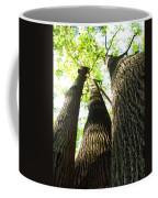Oldgrowth Tulip Tree Coffee Mug