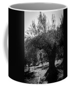 Olive Trees In Italy 2 Coffee Mug