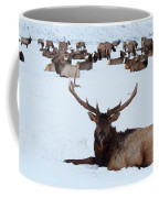 One Plus A Few More Coffee Mug