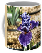 One Sole Iris In Bloom Coffee Mug