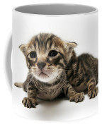 One Week Old Kittens Coffee Mug
