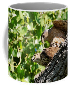 Cooper's Hawks Mating Coffee Mug
