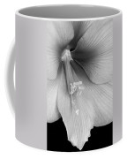 Orange Amaryllis Hippeastrum Bloom 12-29-10 Bw Coffee Mug