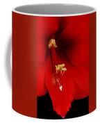 Orange Amaryllis Hippeastrum Bloom 12-29-10 Coffee Mug