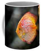 Orange Aquarium Fish In Zoo Coffee Mug