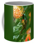 Orange-breasted Sunbird Feeding On Protea Blossom Coffee Mug