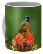 Orange-breasted Sunbird On Protea Blossom Coffee Mug