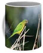 Orange-fronted Parakeet Coffee Mug