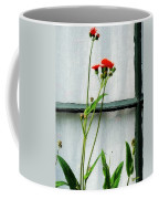 Orange Hawkweed Over Gray Muslin Coffee Mug