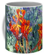 Yellow-orange Kangaroo Paws At Pilgrim Place In Claremont-california- Coffee Mug