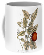 Orange Tree, 1735 Coffee Mug
