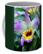Orchid 34 Coffee Mug
