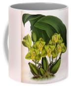 Orchid, Bifrenaria Aurantiaca, 1891 Coffee Mug